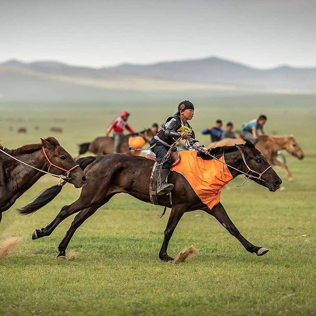 📷@sarahfarnsworthfieldsports  I have been lucky to ride some pretty amazing and and athletic horses in my life. The Mongolian horses I rode during the race were were amoung some of the best.  During start camp we were treated to a mini Naadam race. The Naadam festival occurs each year and includes horse races 15–30km long. Children from 5 to 13 are chosen as jockeys. We all saw this boy with the backwards hat ride by and we pegged him as the winner, we were right.  I was nervous for the start of our own race, 40+ riders shoving through a narrow set of flags in the rain. My initial stategy was to hang back and break away from the back, when I got my first horse that changed. I got a big (by Mongolian standards) bay horse that looked grumpy and seasoned. The herders told me he had won 3 big races in his life. As soon as I got on it was apparent this horse knew what he was doing. I decided I had to go for it, when else would I be on a Mongolian race horse?  We bolted out of the start and I was grinning like a little kid. He navigated the terrain without ever loosing speed. He was unbelievably scopey, shortening and lengthening his stride to leap over marmot holes.  I only named horses that were exceptionally memorable. I named this horse Albert after my sister @a_wall11 's ex race horse who was the same color bay and had that grumpy/wise/sit back I know what I'm doing look.  This set the tone for how I rode horses (mainly successful) for the rest of the race, be invisible. These horses were athletes, this was their home, they know nothing about fences or being contained and the knew way more than I did. I tried to stay out of the way, maintain independent balance and be invisible. This carried me all the way across the finish line.  #mongolderby2019 #mongolderby #horserace #enduranceracing #mongolia