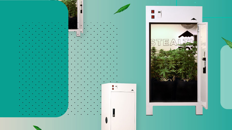 A beginner's guide to growing cannabis at home - https://lift.co/