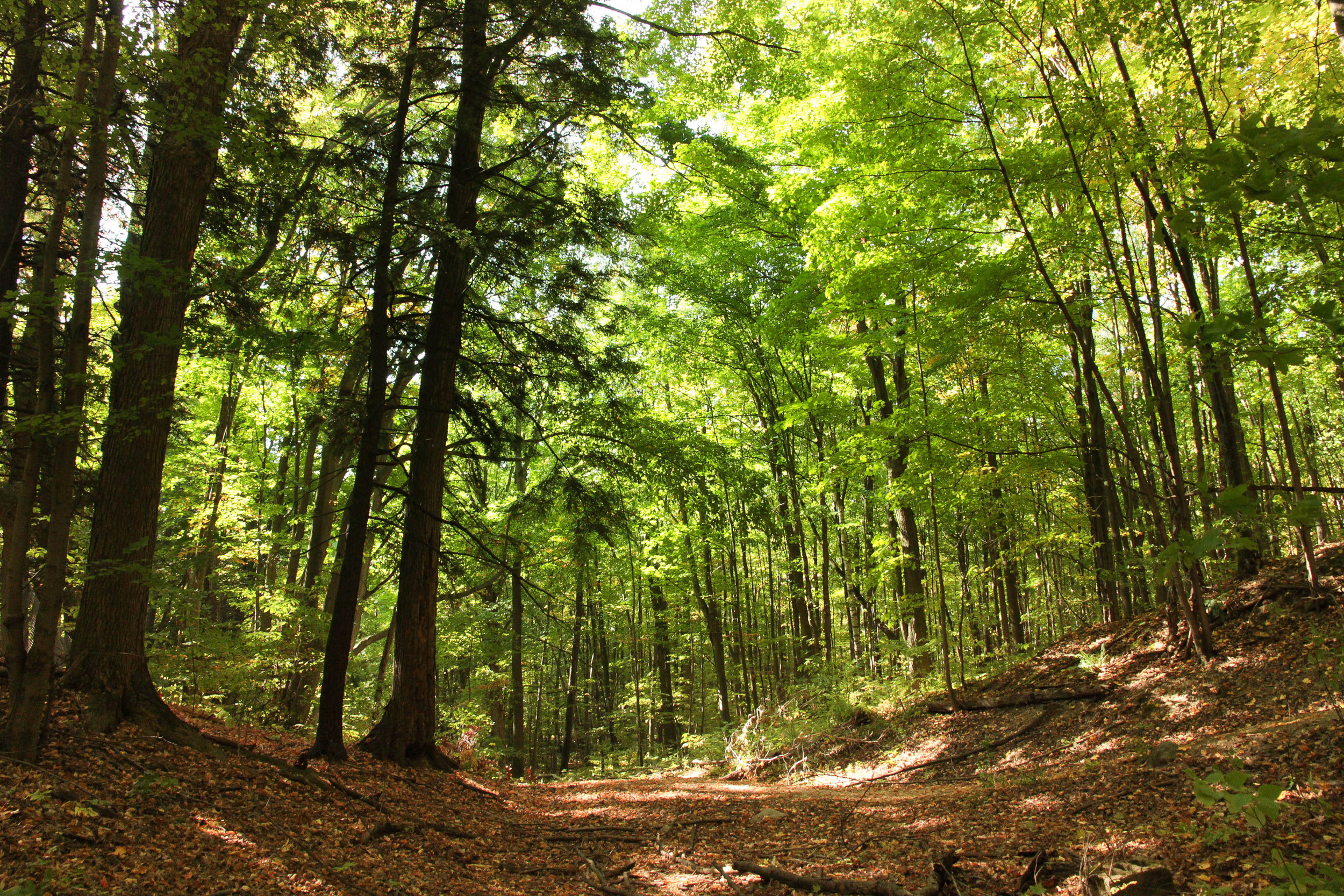 Happy Valley Forest Trail_Photo by NCC.jpg