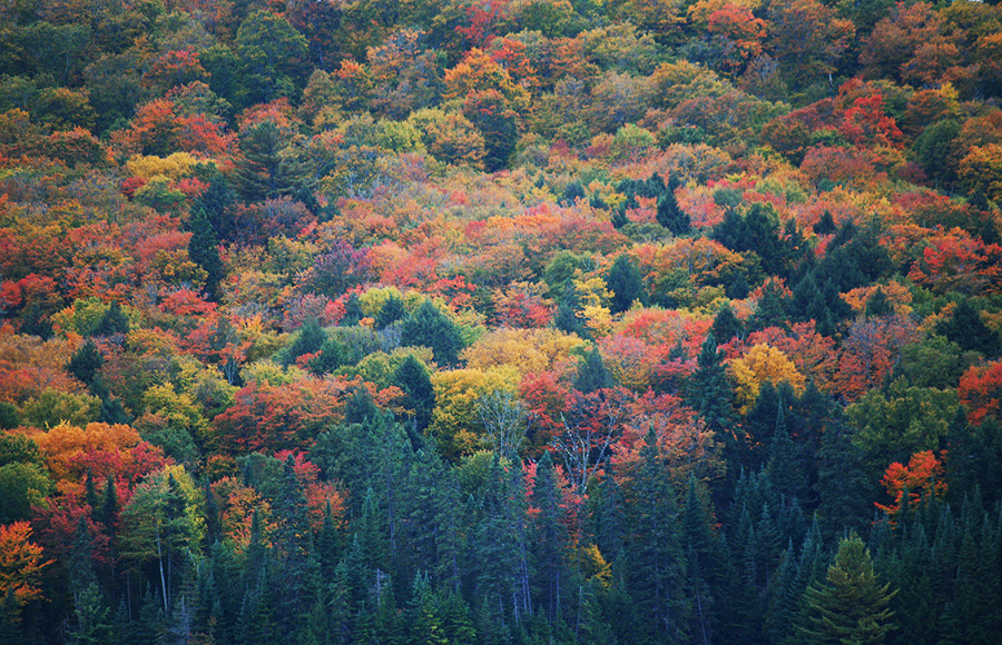 Fall Colours in Algonquin