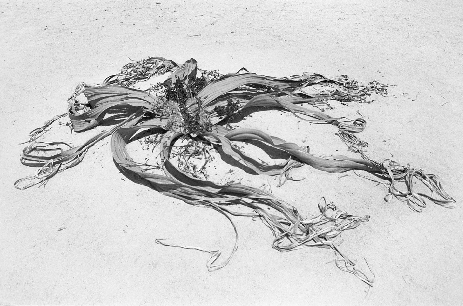 Kopie von Una-Szeemann-Kunsthalle-Winterthur-2018-4