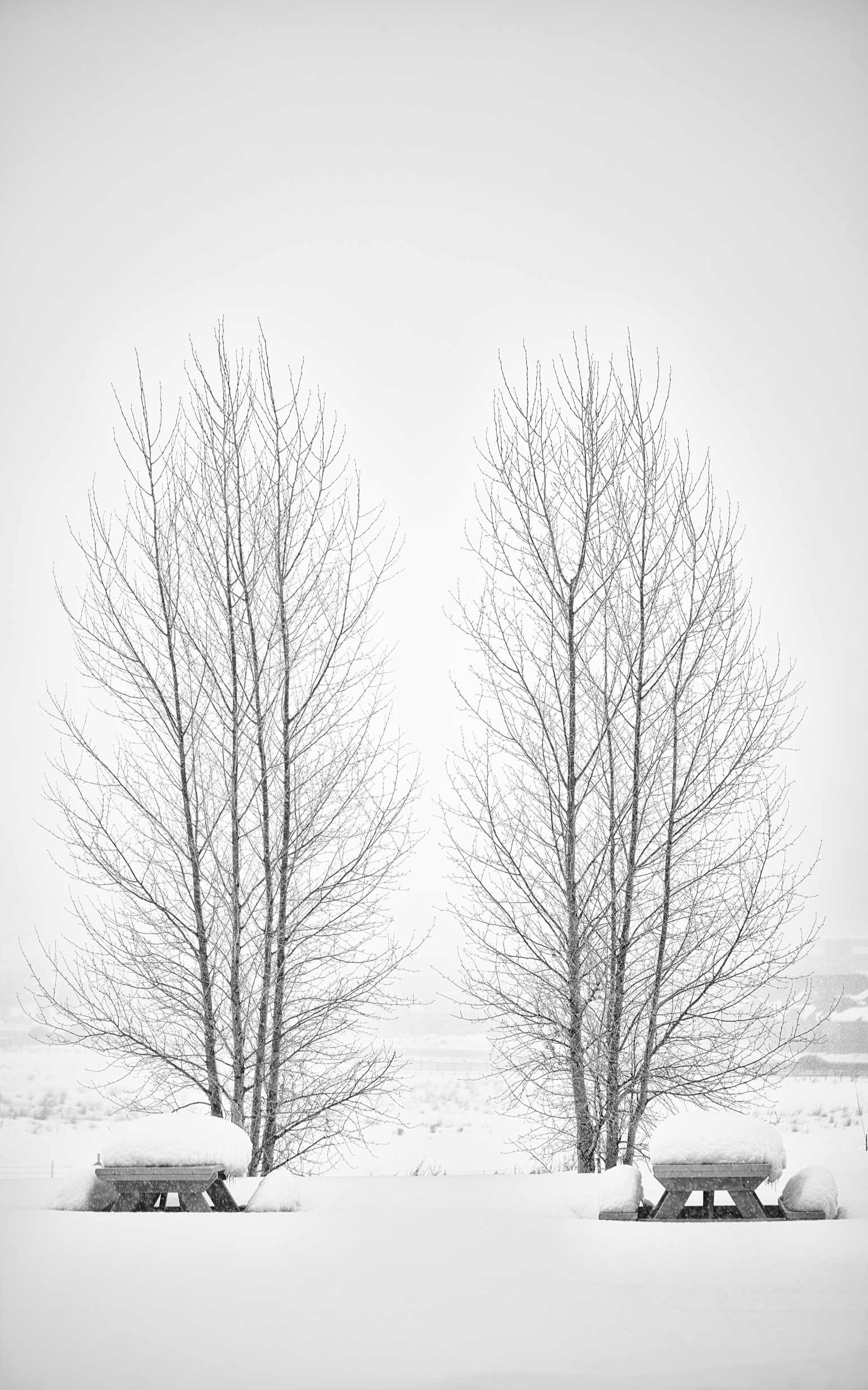 _-19.tif_winterspicnic.jpg