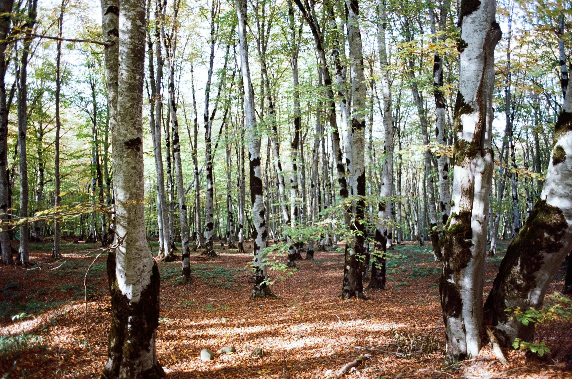 Sabaduri Forest, Tbilisi National Park, Georgia: Nikon F3, Zeiss Planar 50mm 1.7, Kodak Ektar 100