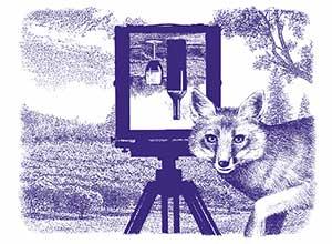 Silver-Fox-Logo_Web_300.jpg
