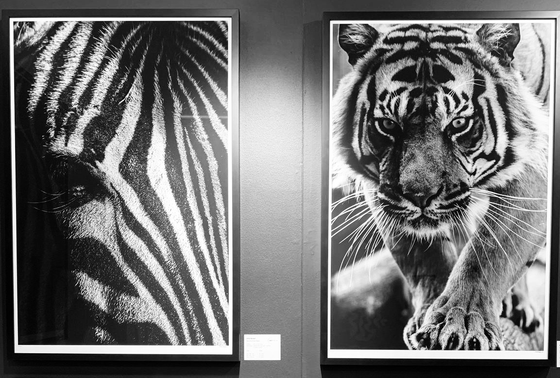 'The Light & The Dark' (Left) and 'Savage Beauty' (Right) at AAF Brussels 2019