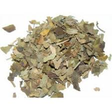 Ginkgo Biloba - We use it for:  Improving circulation to extremities, anti-aging, gout, increasing brain activity, improving memory.   Magickal:  Ritual healings. Dried nuts represent male fertility and are useful in all creative work and Handfasting feasts.