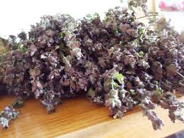 Ground Ivy - We use it for:  Rheumatism, indigestion, kidney.   Magickal:  Divination, Beltane