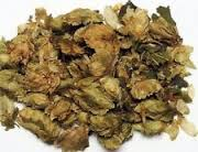 Hops - We use it for:  Diuretic, laxative, chest complaints, blood cleansing, strengthening bile, insomnia, nervous disorders, decreasing desire for alcohol, sexual depressant, improving appetite, heart & liver problems.   Magickal:  Good health, sleep (stuff pillow with hops), divination, comfort, relaxation