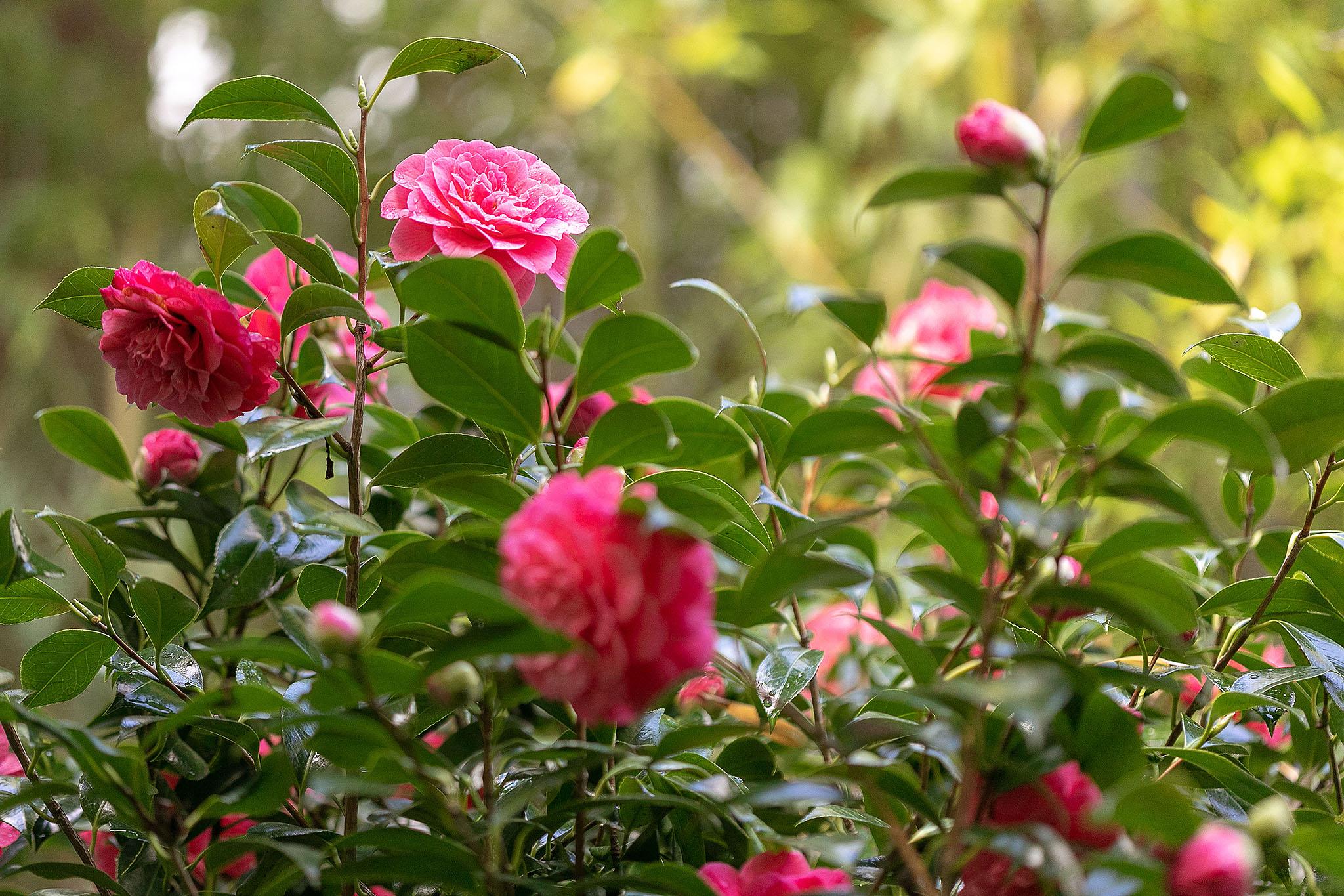 15 Floral.jpg