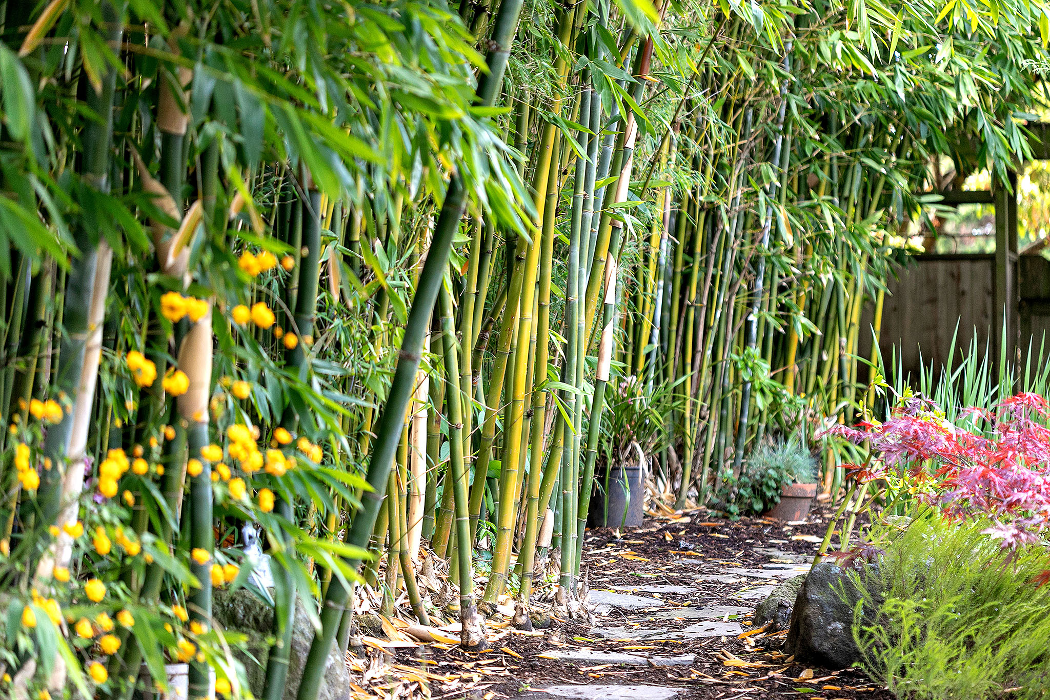 39 Bamboo garden.jpg