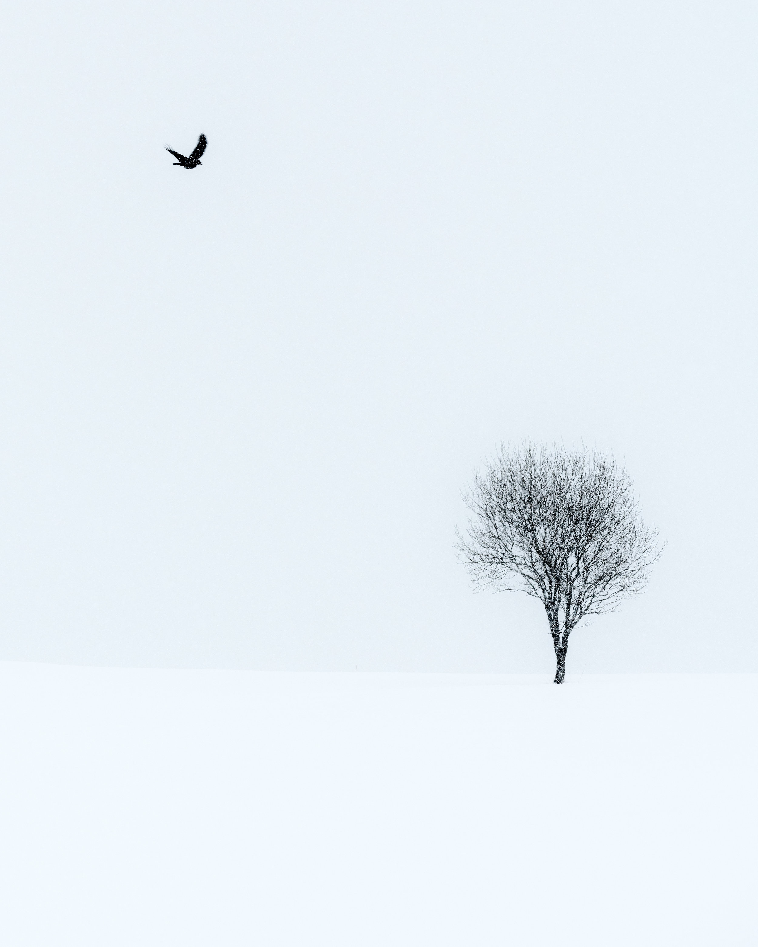 'Solitary' - taken during a heavy snow storm near Leknes.