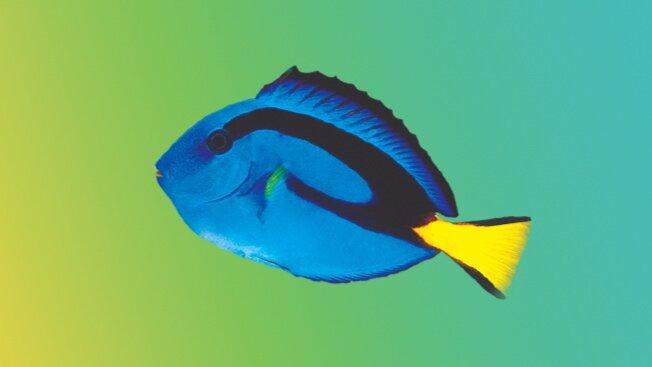 Are Most Fish Omnivorous? — New Life Spectrum®: Fish Food