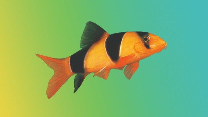 Garlic Myths & Realities — New Life Spectrum®: Fish Food