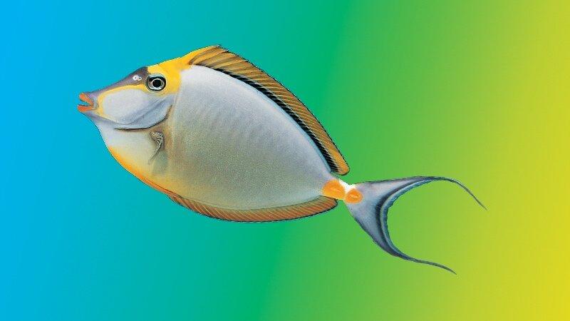 Feeding Myths & Best Practices — New Life Spectrum®: Fish Food