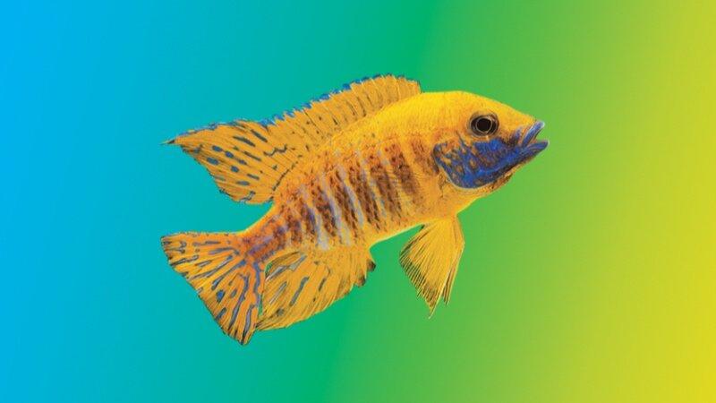 What Makes Superior Fish Food? — New Life Spectrum®: Fish Food