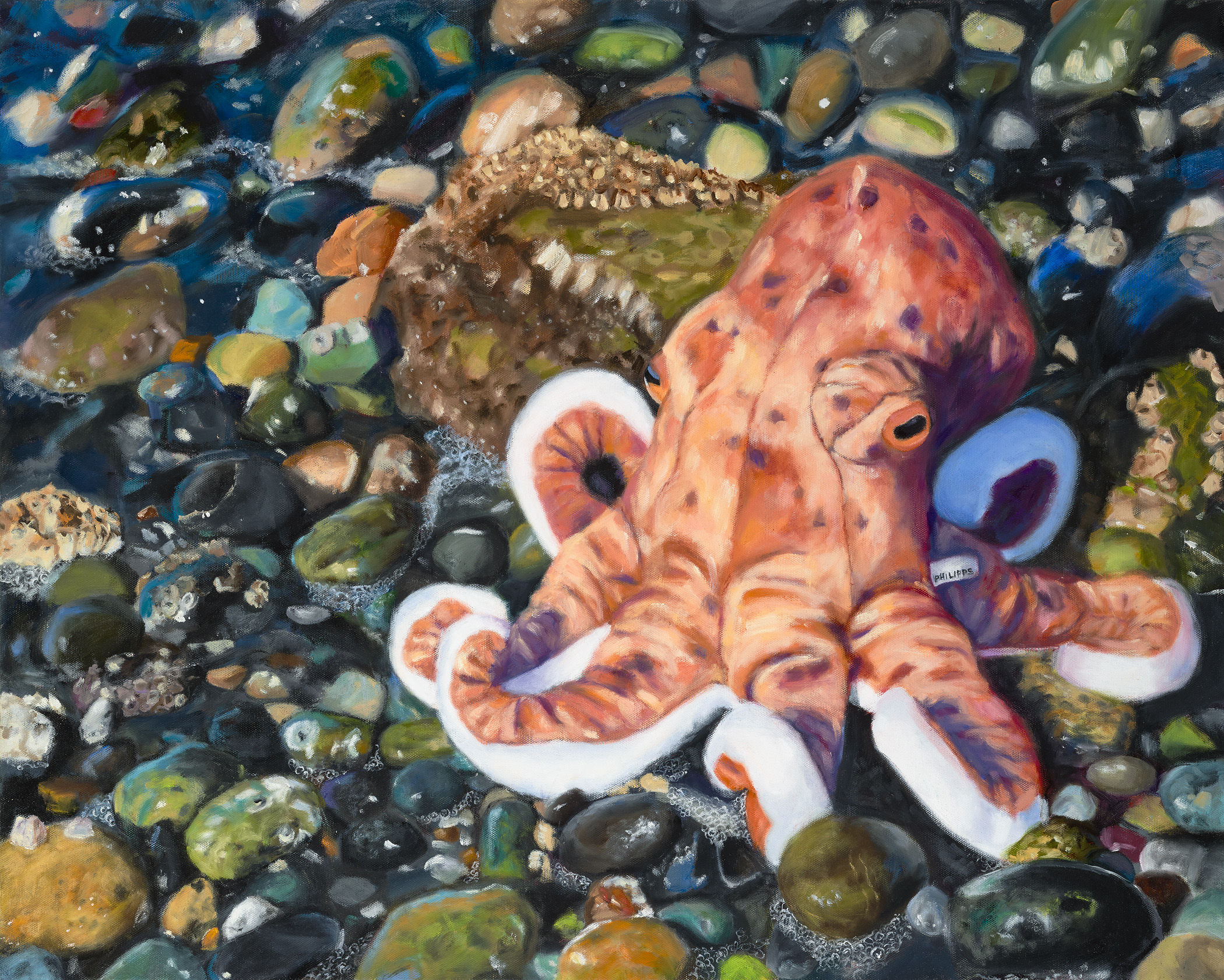 """Last Call: Giant Pacific Octopus"", Oil on Gallery Wrapped Canvas, copyright Lisa Philipps, 2019."