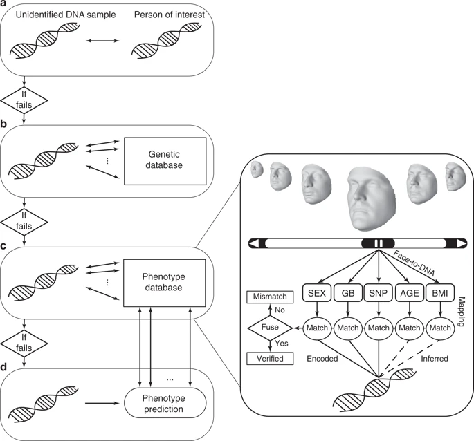 Diagram of DNA phenotyping (Source:  Nature Communications )