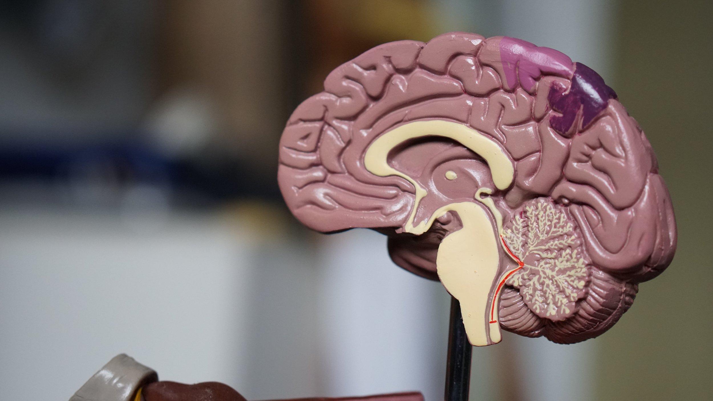 A scientific model of the human brain.