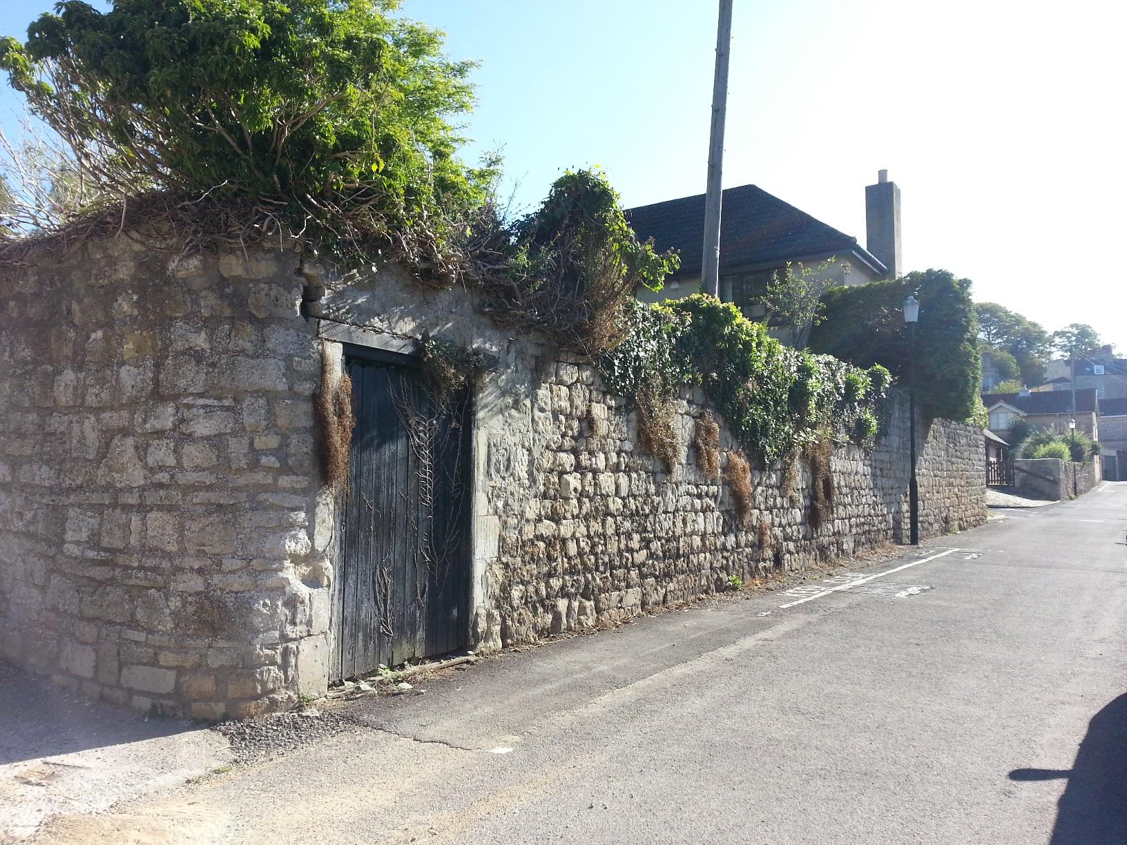 South wall to Beckford's garden, 28.8.15