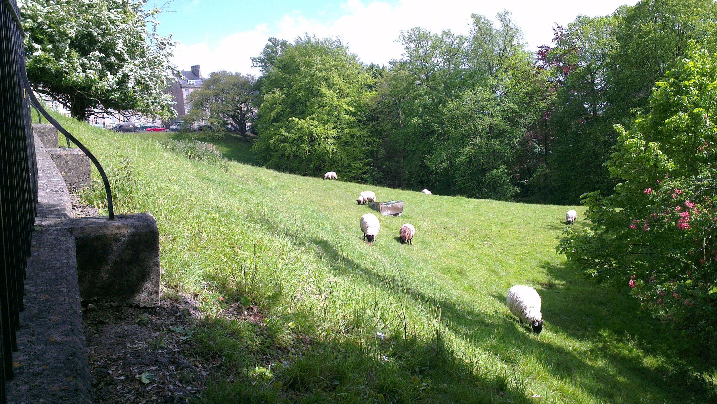 A sheep's eye view, 18 May 2015