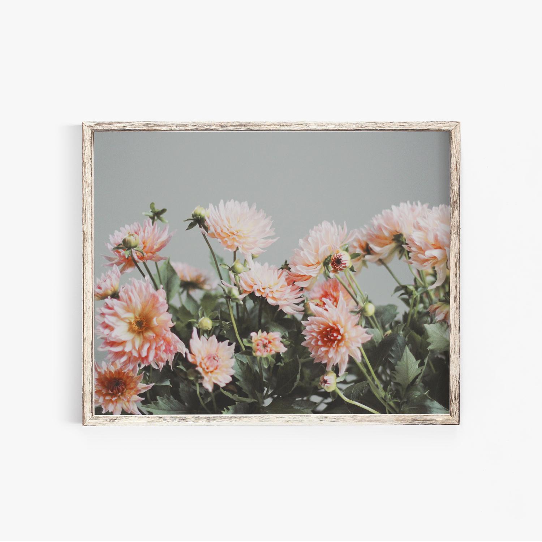 Peach Dahlias Photography Print