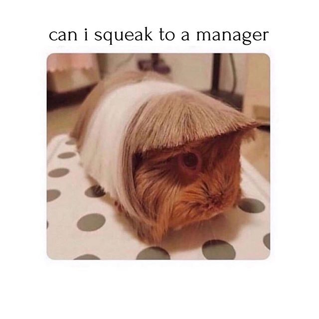 hahahahahah. i crack myself up. #meme #karen #manager #squeak #rude #speaktoamanager #haircut #livelaughlove #trash