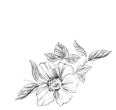flower+charcoal.jpg