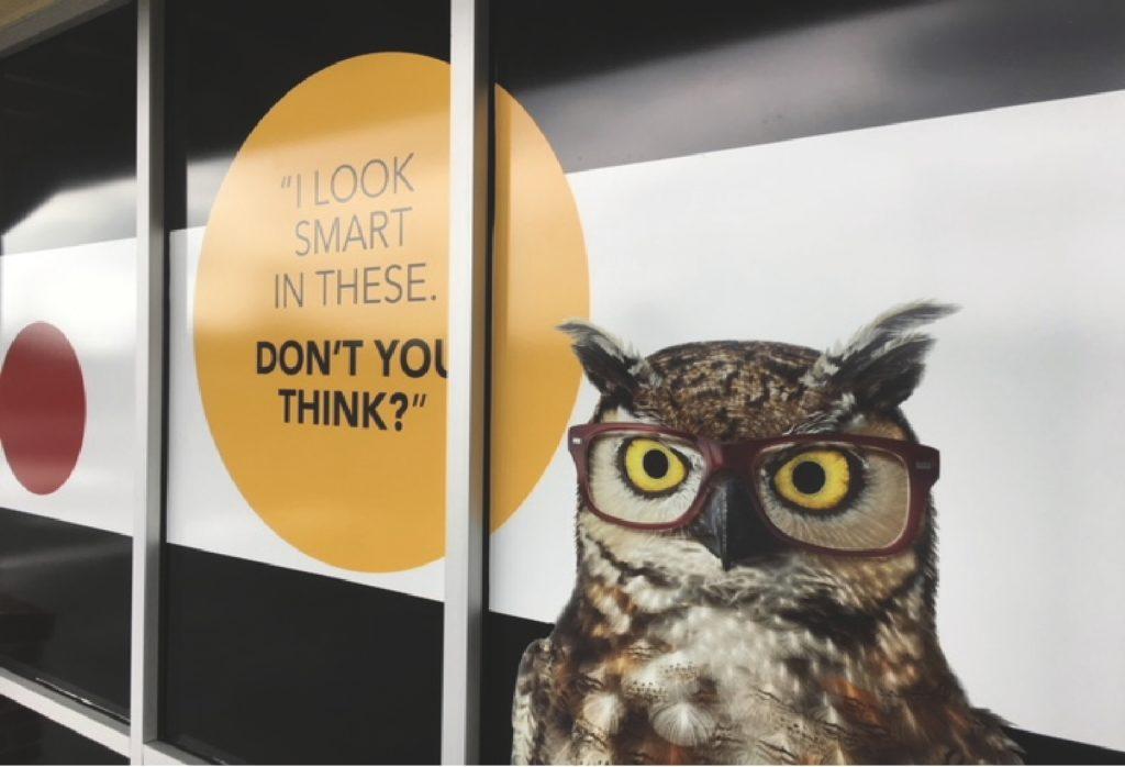 owl-vinyl.jpg
