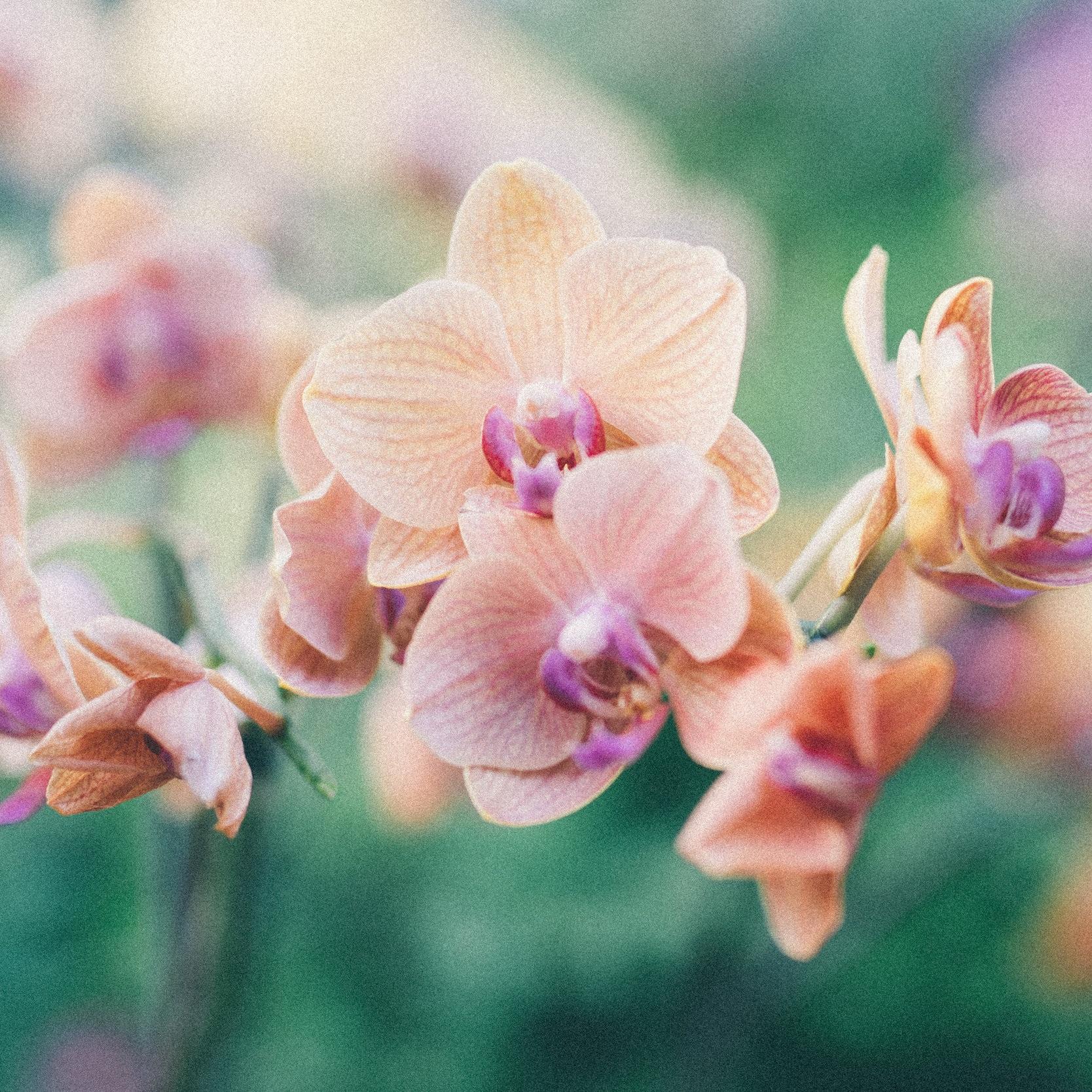 Marama Flower Essences - Shop our flower elixir or co-create your own bespoke essence.