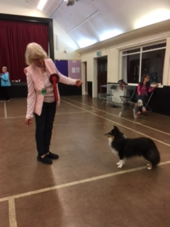 Puppy class 1st and Best in Show. Linda Whittington and Bramble the Sheltie