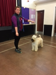 Post Graduate and Handling class 1st plus Reserve Best in Show. Helen Johnstone and Obi the Short Haired Wheaten Terrier