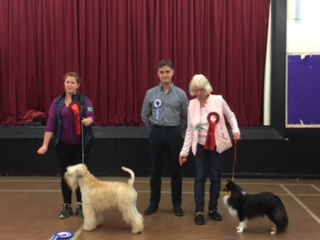 Obi and Bramble with judge Kevin Holly