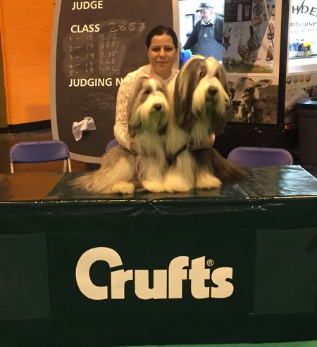 Sarah at Crufts with Eric and Elsie