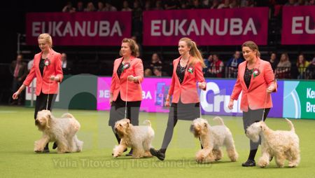 Picture © Yulia Titovets, official Crufts photographer