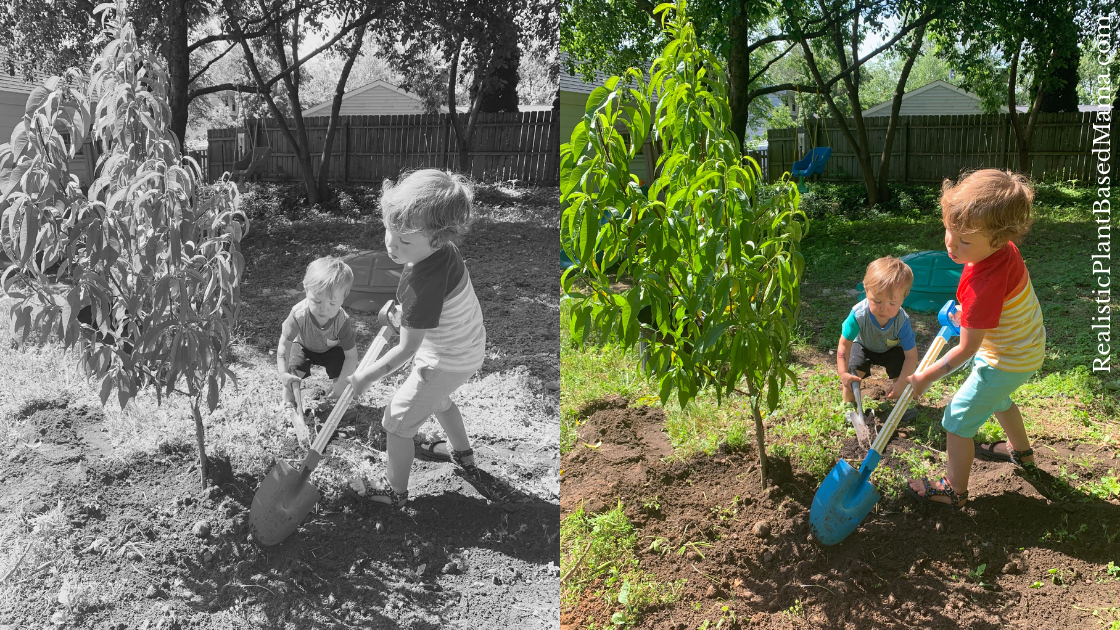 Planting a tree in honor of their baby brother.