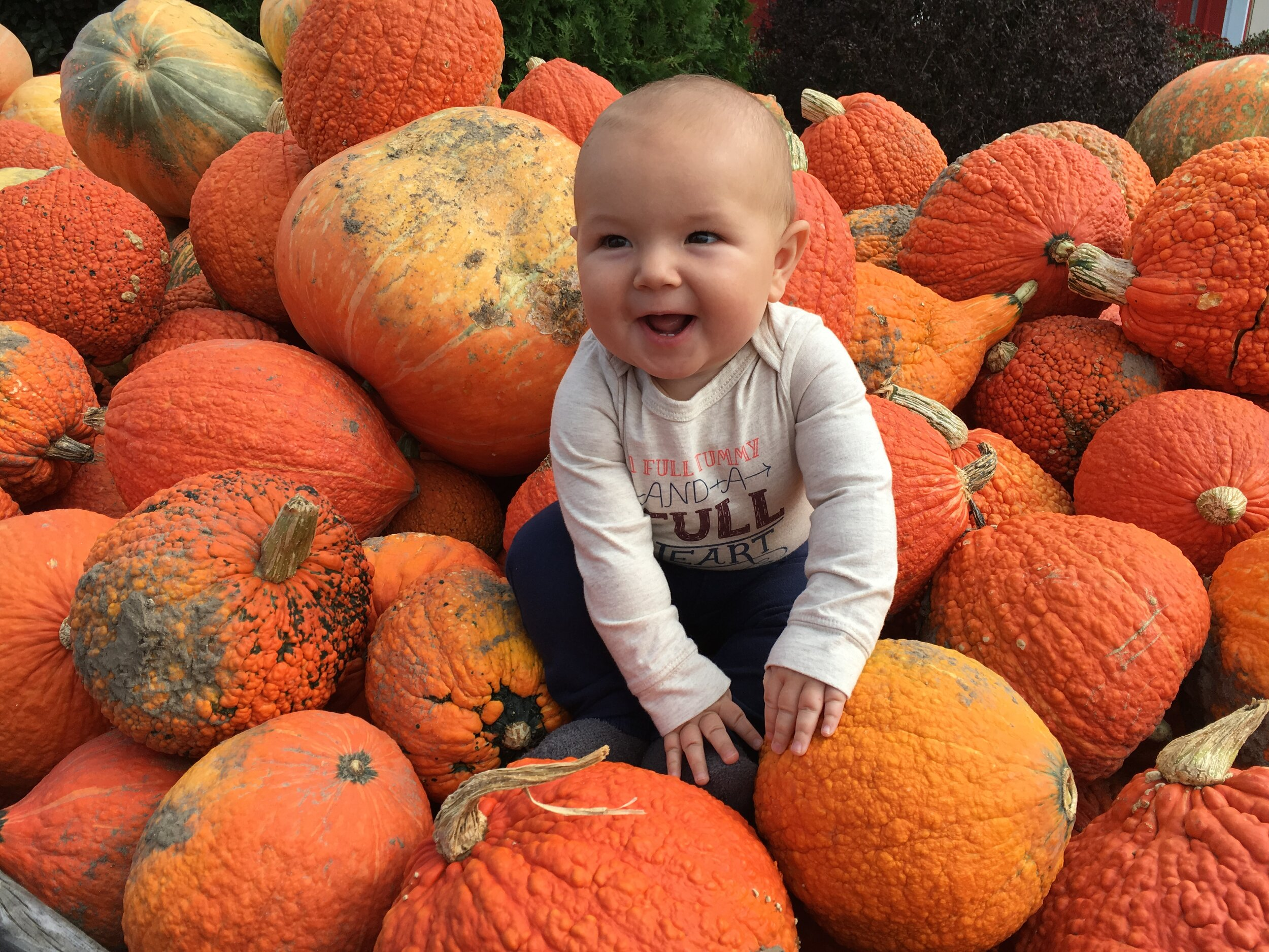pick pumpkins in the fall / fall bucket list ideas for families / realistic plant based mama