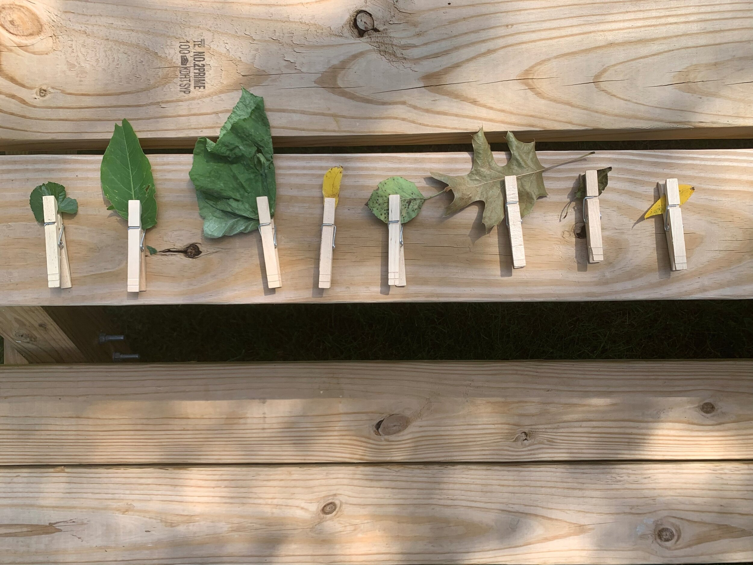 Here we clipped leaves we found with clothespins which was a ton of fun for both my 2 and 3.5 year old.
