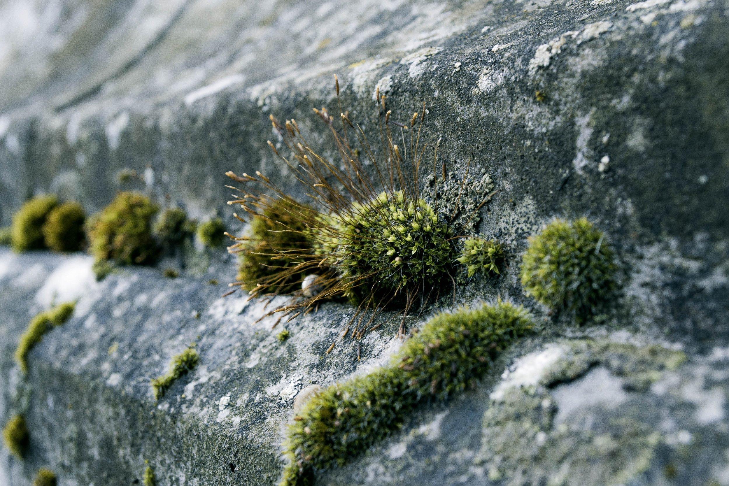 concrete-concrete-surface-gardening-53783.jpg