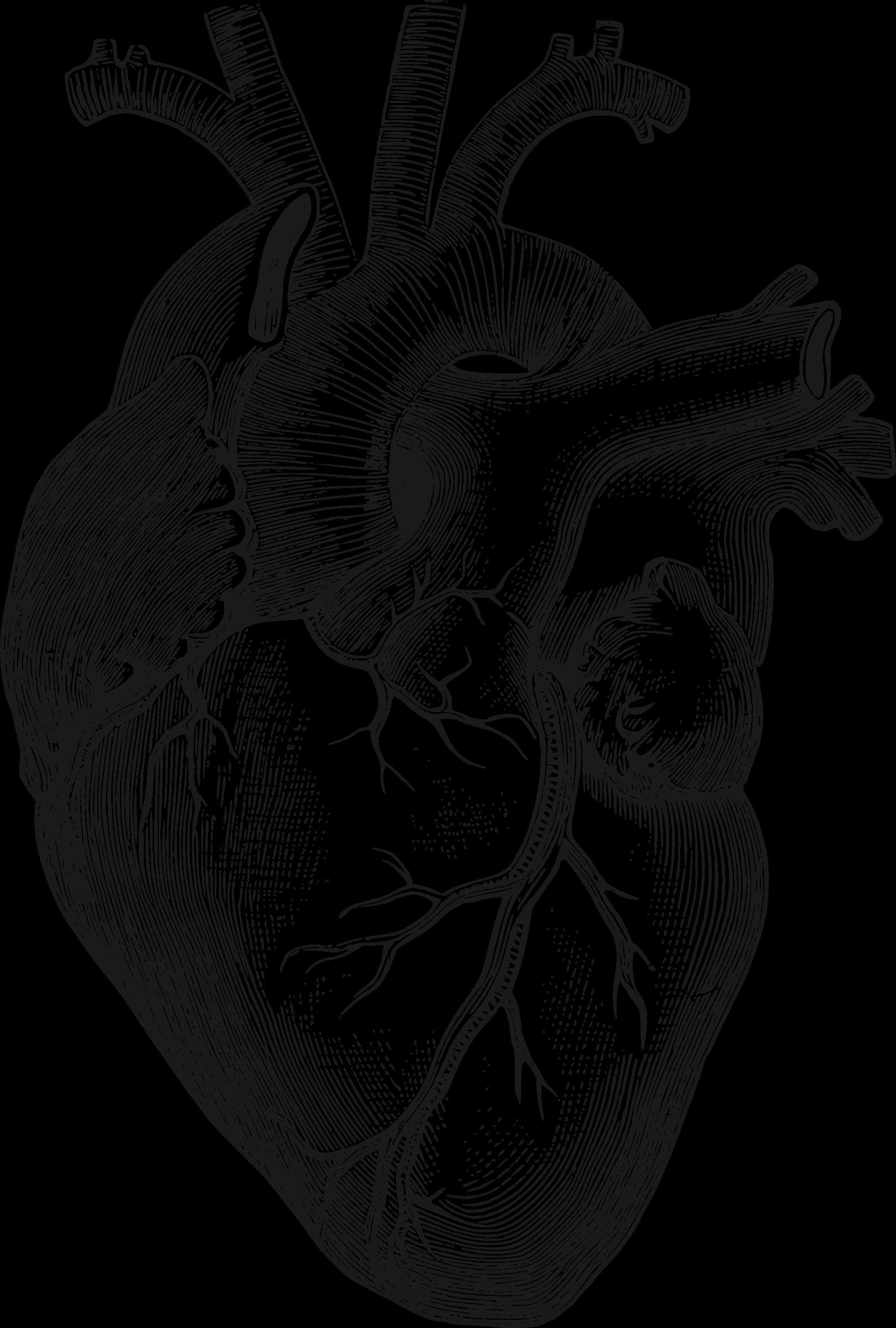 anatomical-heart.png