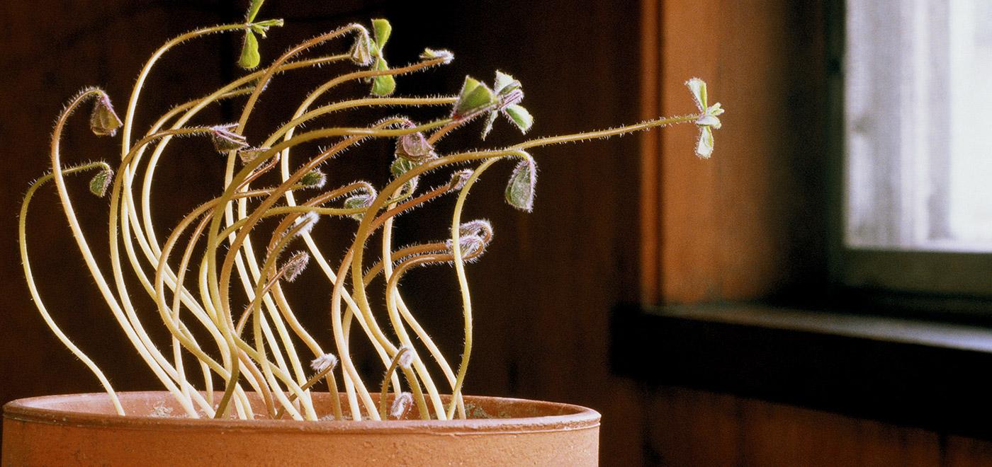 plants-2-reachingforlight2_2.jpg
