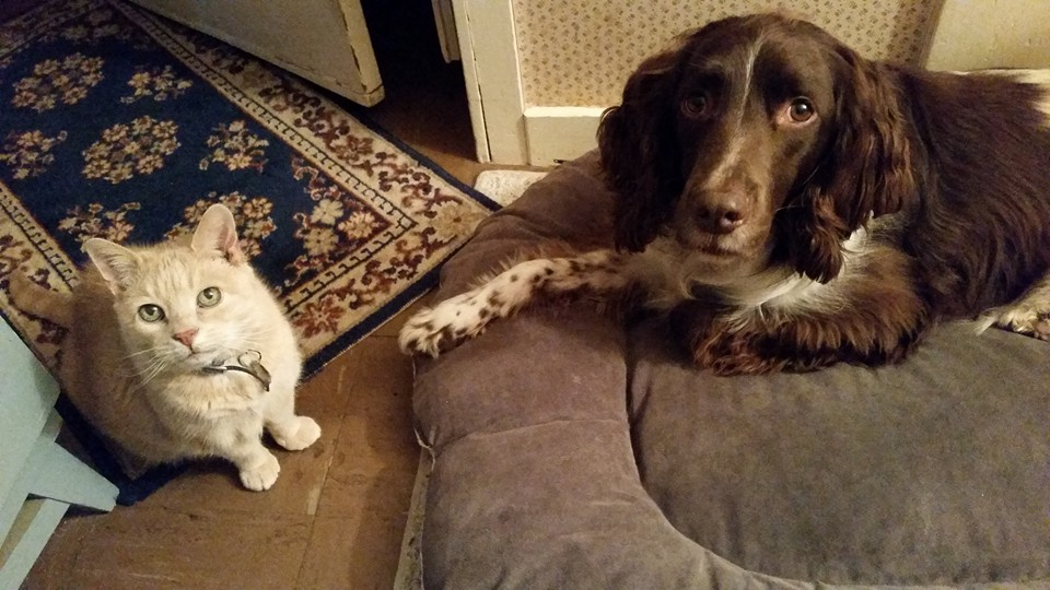 Millicent is a 15-year-old cream tabby cat, and Jesse is a 9-year-old English Springer Spaniel. They are not allowed in guest rooms at any time. Both pets are rescues. You will likely see Jesse but Millicent prefers to stay secluded.