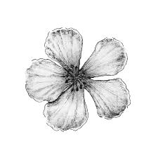 사쿠라 잎.png