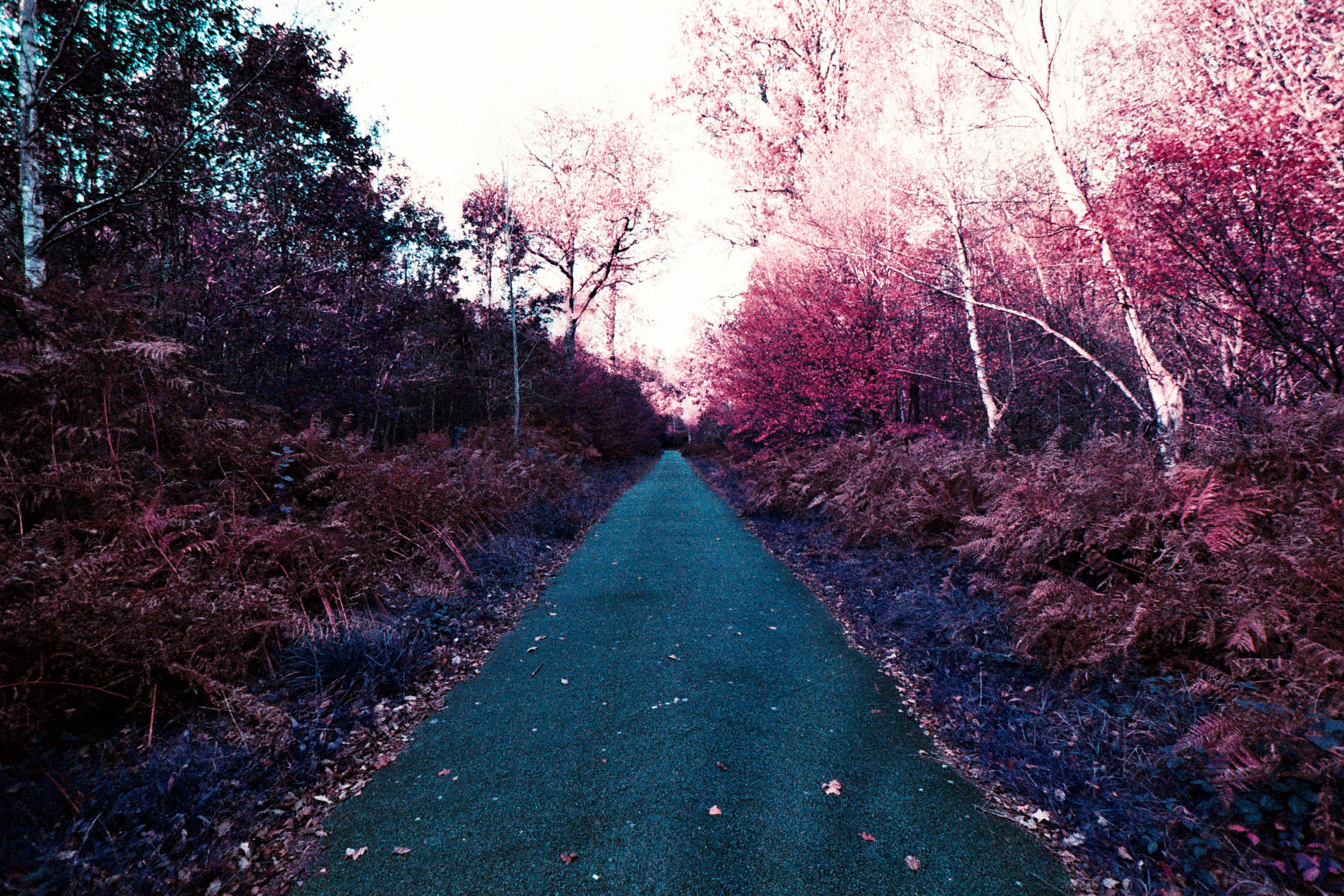 02_EOS1N_LOMOCHROME_PURPLE_200_copyright_ThomasApp.jpg
