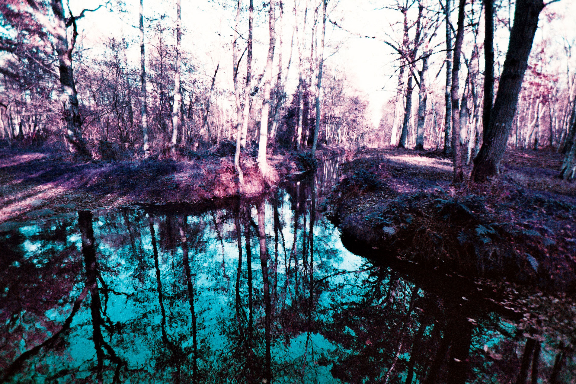 03_EOS1N_LOMOCHROME_PURPLE_200_copyright_ThomasApp.jpg