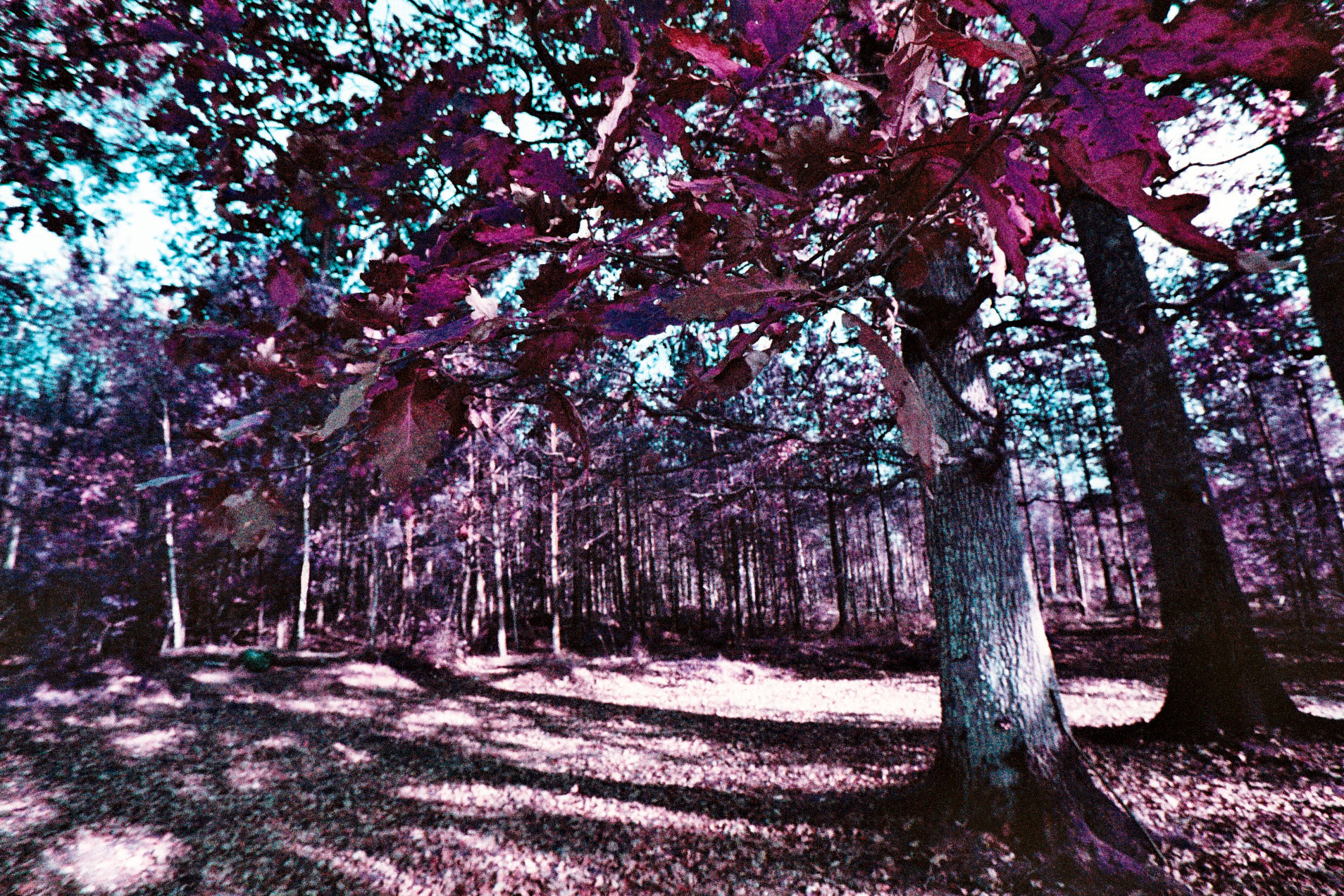 05_EOS1N_LOMOCHROME_PURPLE_200_copyright_ThomasApp.jpg