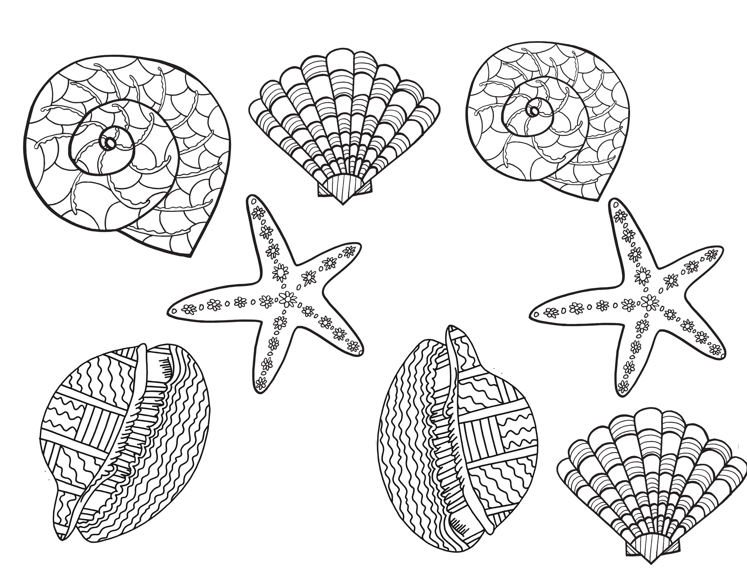SHELLS - Free Printable Coloring Page — Stevie Doodles