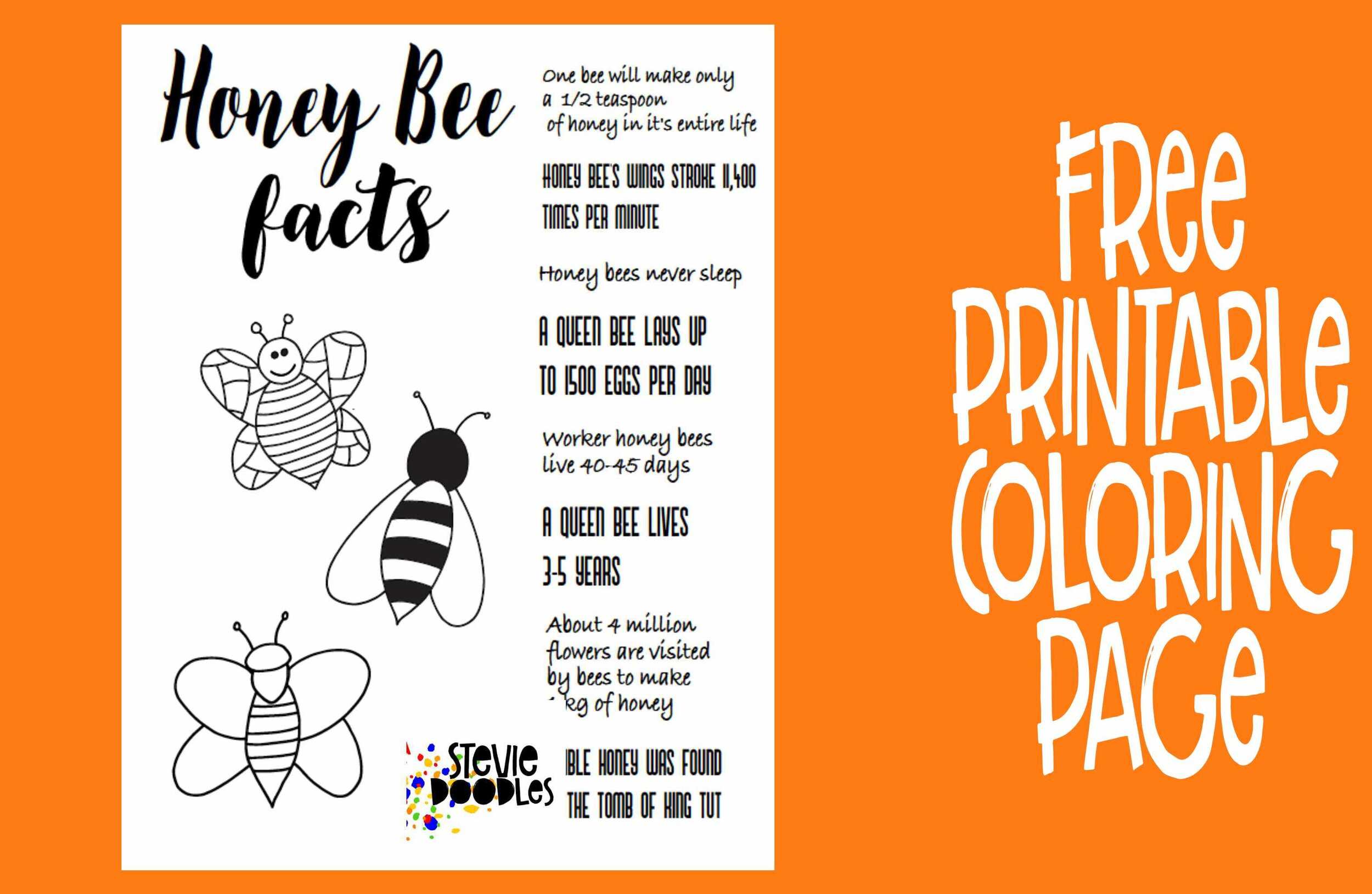 Honey Bee Facts Free Printable Coloring Page Stevie Doodles