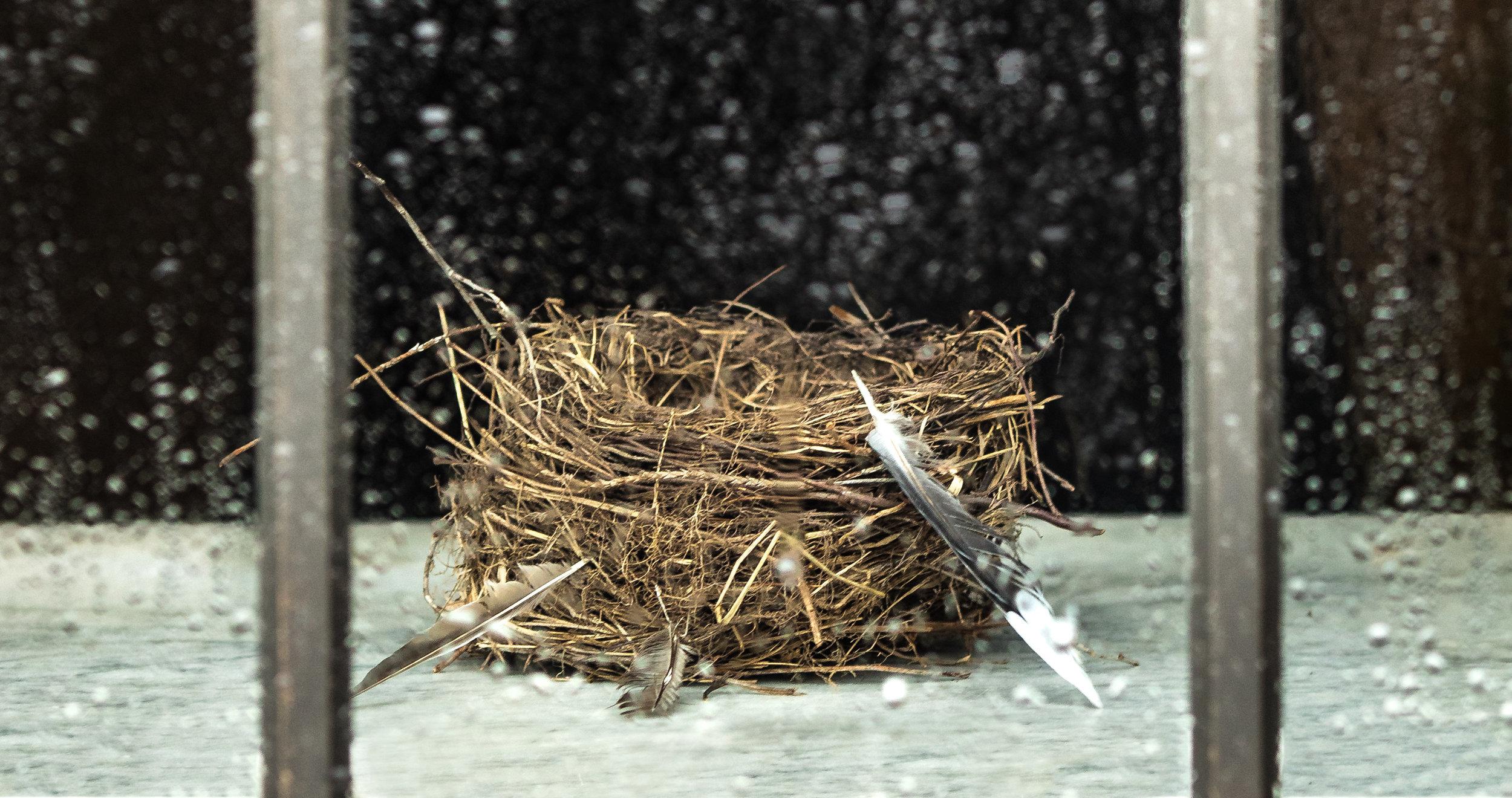 empty nest (1 of 1)-2.jpg