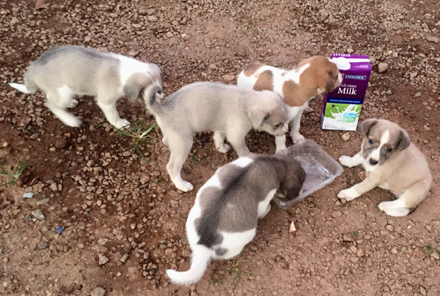 The puppies Yoseph rescued in Ghana