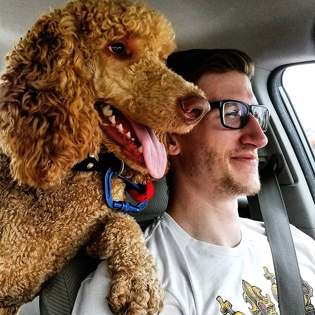 Make a left here then go straight... Okay, see those golden arches? Drive up to the speaker and say the code words I gave you, then pull around and get the bag of goods! I'll watch your 6, Dad. You got this. 😎 .. .. .. .. .. .. .. .. .. .. #dogs #doglife #poodles #614dogs #standardpoodle #redstandardpoodle #doge #goodboy #adventuredog #ohiodogs #poodlesofinstagram #standardpoodlesofinstagram #instadog #mcnuggets